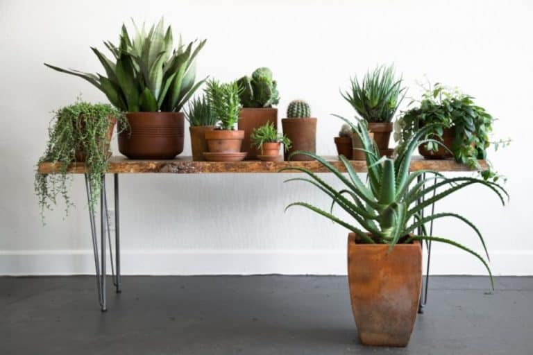 Are Terracotta Pots Good For Indoor Plants? (Pictures & Examples)