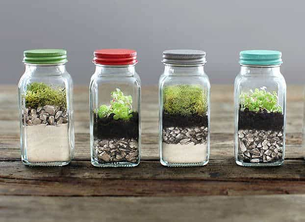 Can Plants Grow in Glass Containers? (With Examples)