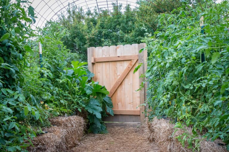 Do You Need A Trellis For Zucchini? (A Farmer's Guide)