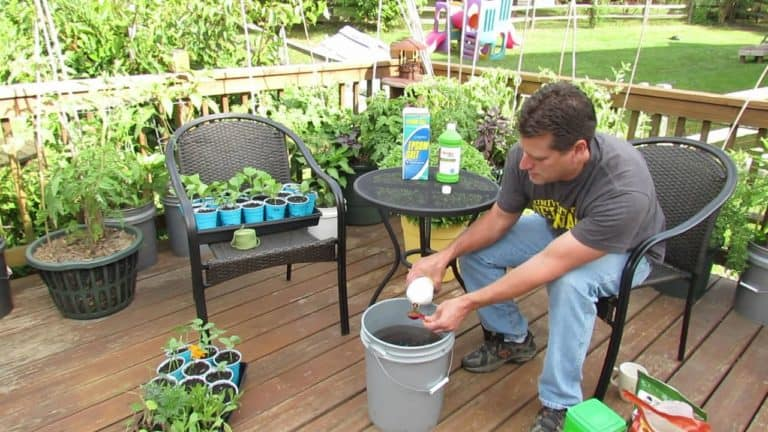 Does Liquid Fertilizer Need To Be Watered In? (Yes)