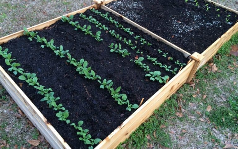 Raised Bed Soil vs Garden Soil: Differences and Uses?