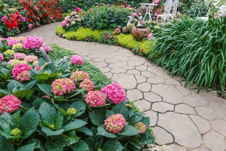 What Colorful Plants Grow In Shade? (10 Examples & Pictures)