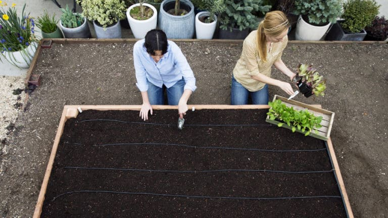 What Is The Best Soil Mixture For Raised Beds? (Top 3)