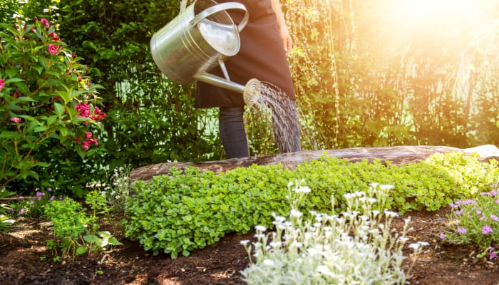 How Often Do You Water A Square Foot Garden (Daily or Weekly)?