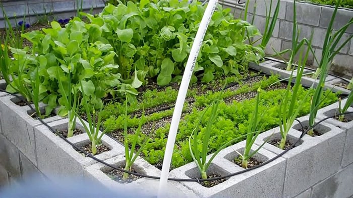 Is It Safe to Grow Vegetables in Concrete (Yay or Nay)?