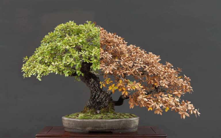 Do Bonsai Trees Need Special Pots? (Best Pots | Pictures)