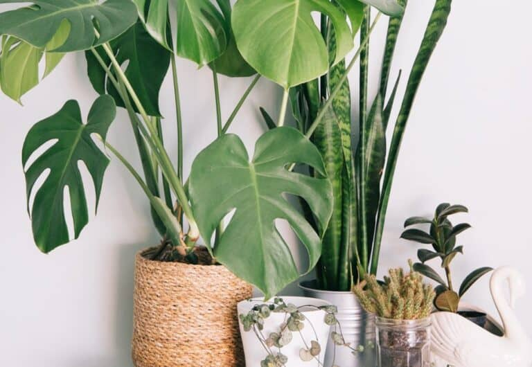 How Much Co2 Does A Houseplant Absorb? (Facts Explained)