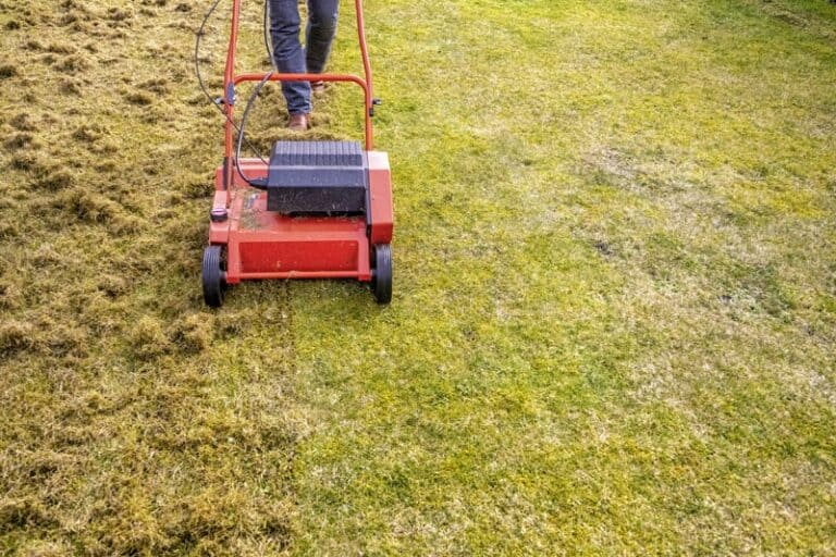 Should I Aerate or Dethatch My Lawn? (Important Facts)