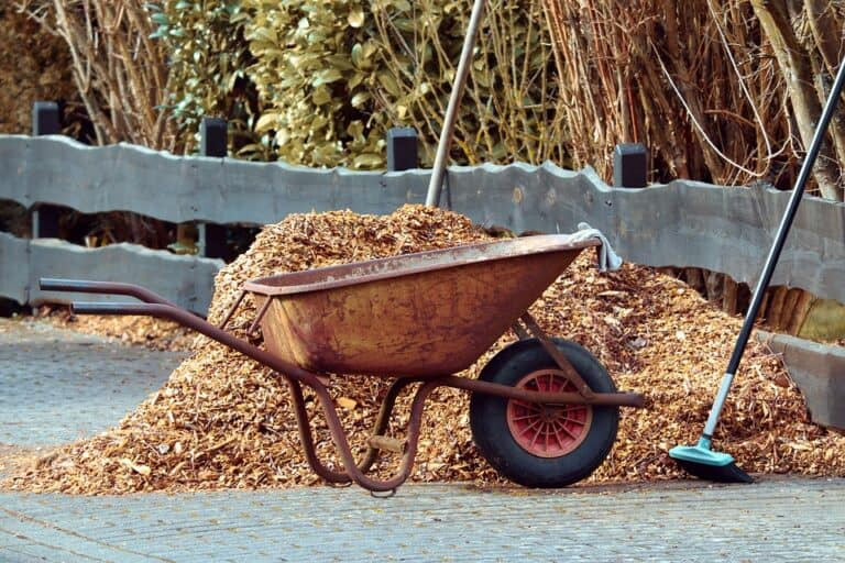 Living Mulch vs Regular Mulch For Plants (Which is Better)