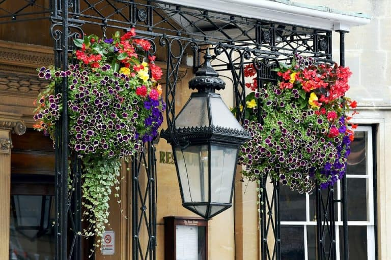 Top 10 Cascading Plants for Hanging Baskets (with Pictures)