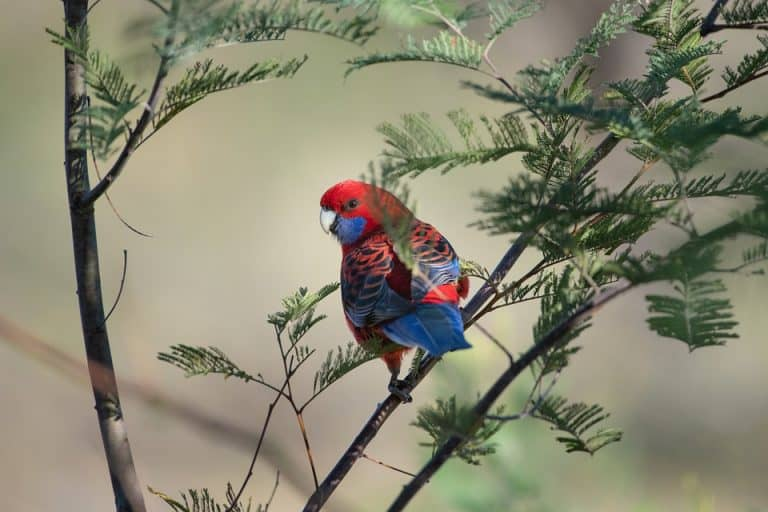 Top 10 Plants That Attract Australian Birds (with Pictures)
