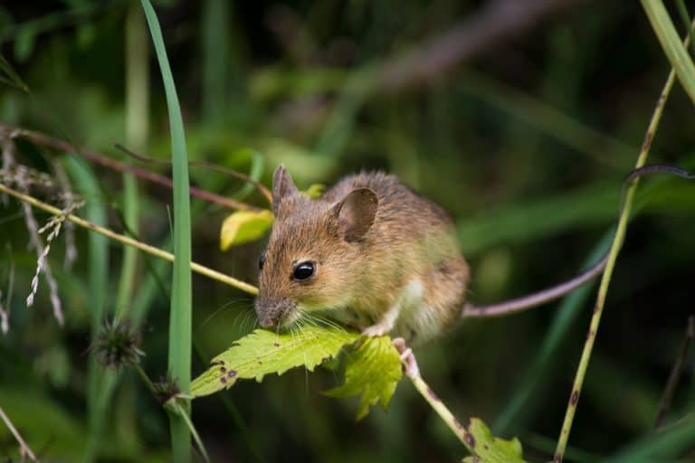 Top 10 Plants That Attract Mice To The Garden