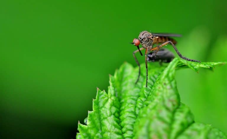 10 Plants That Repel Biting Insects (with Pictures)