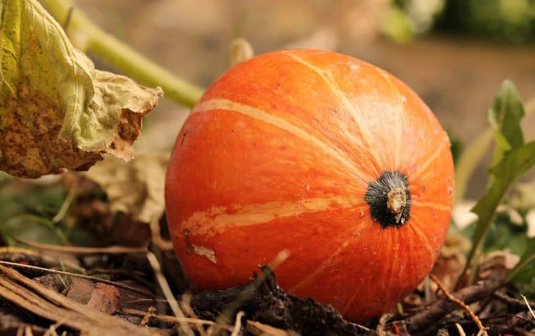 10 Plants That Repel Squash Bugs (with Pictures)