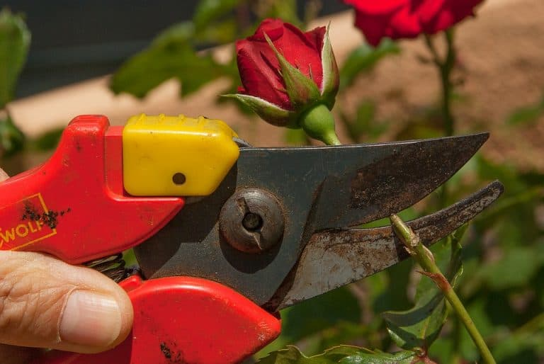 What Are The Best Brand Of Secateurs? (Top Rated | How to Use)