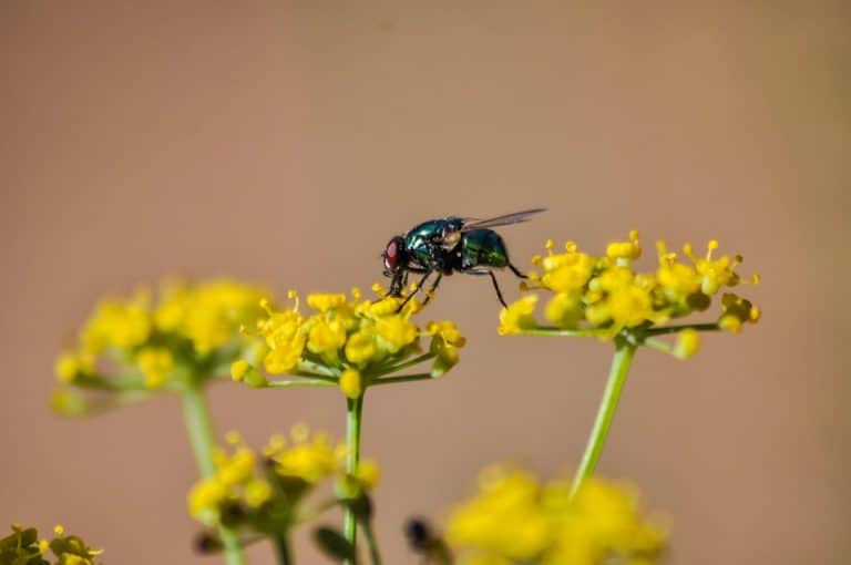 Why Is My Houseplant Full Of Flies? (Causes and How to Get Rid of Flies)