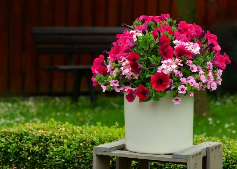 Top 10 Container Plants for Partial Sun (With Pictures)