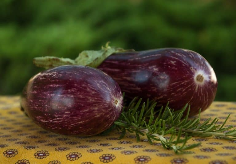 Is Eggplant A fruit Or Vegetable? (How It's Classified)