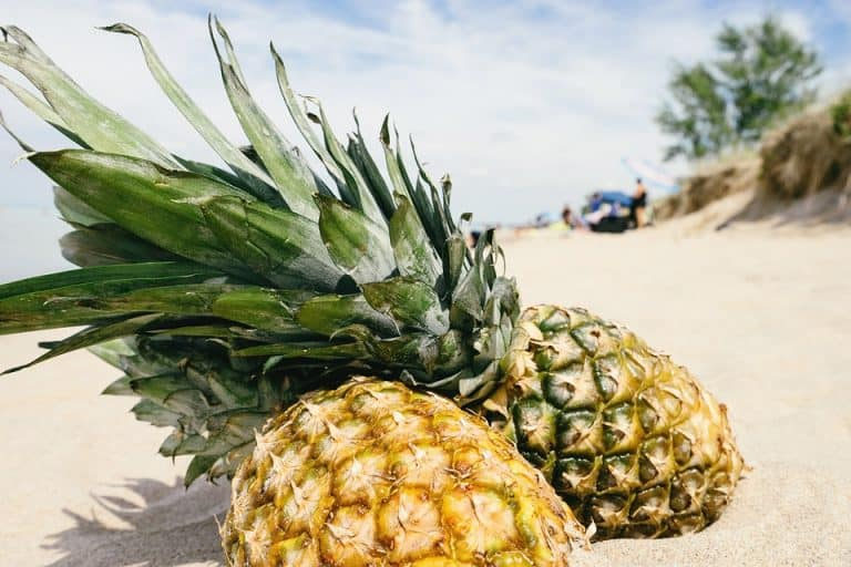 Is Pineapple a Fruit or Vegetable? (5 Facts to Know)