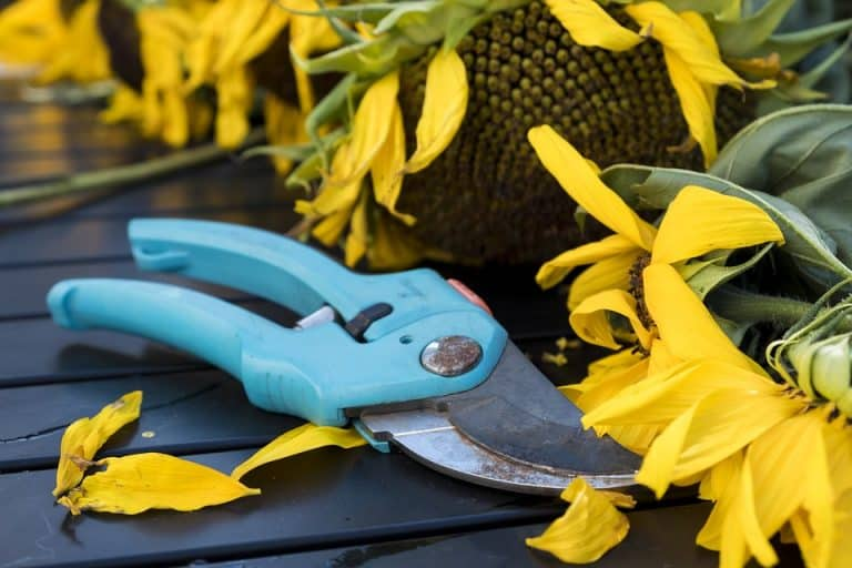 Pruner vs Secateur: Differences & How to Use Them in the Garden)