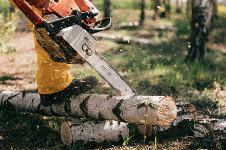 Can You Use A Reciprocating Saw To Cut Tree Limbs?