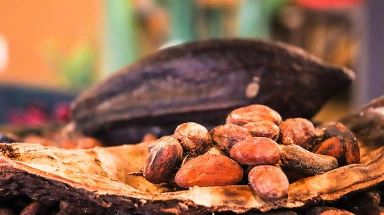 How To Plant Cacao Seeds (Soil, Care, Watering)