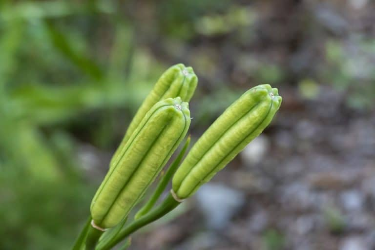 10 Plants That Have Pods [A Complete List 2021]