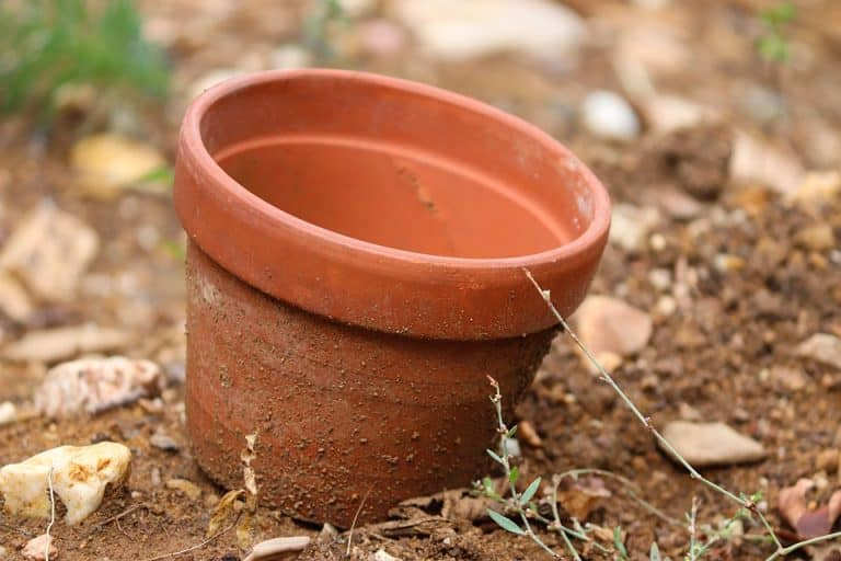 The Best Size Pot For Growing Cucumbers (12-Inch Diameter)