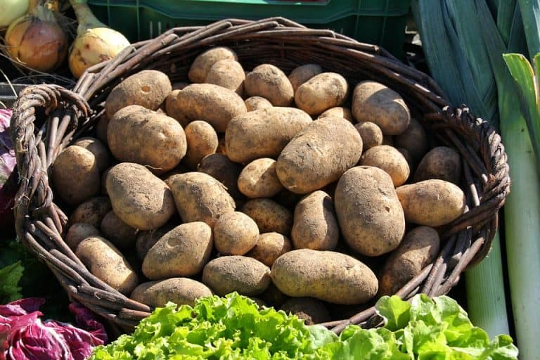 The Best Potatoes To Grow In Containers (Plus How to Grow Them)