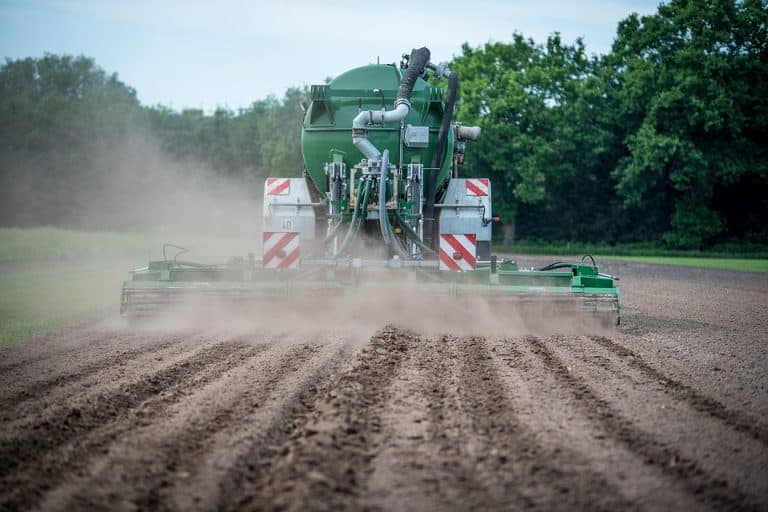 Can Fertilizer Kill Seedlings? (Everything You Should Know)