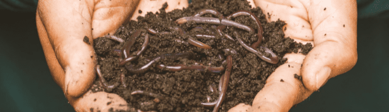 What Is The Best Compost For Bulbs? (Top 6 Homemade Composts)