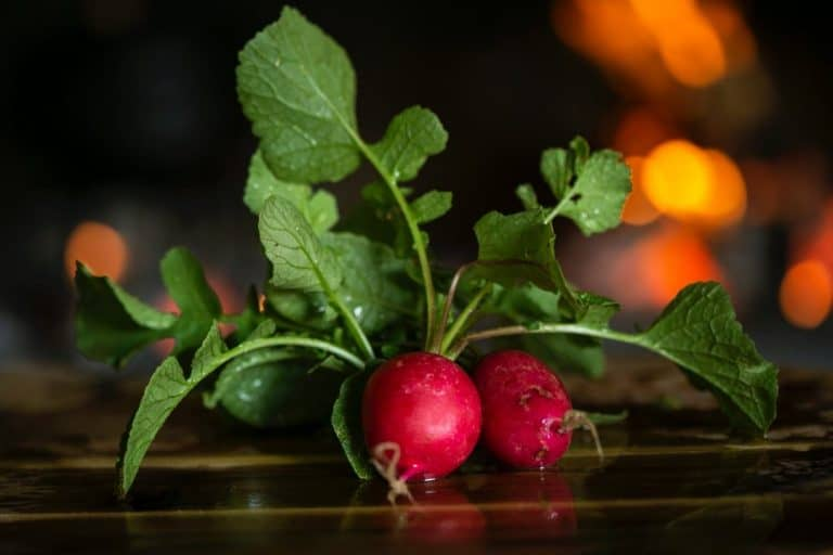 How to Grow Radish Without Soil (read this first)