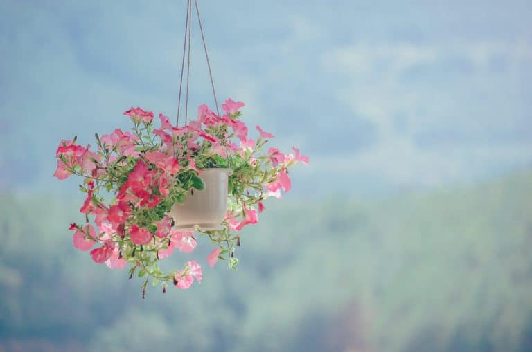 10 Hanging Plants Ideas You'll Love (with Photos)