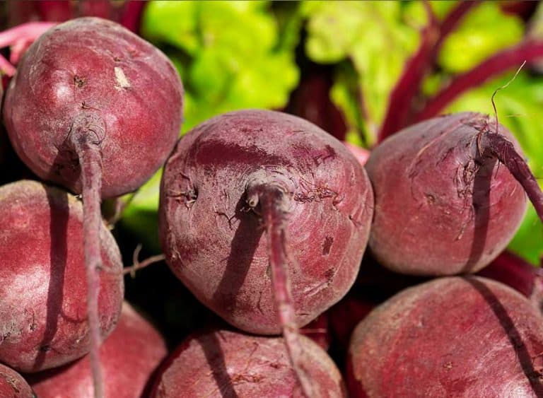 Beetroot Seeds: What You Need to Know