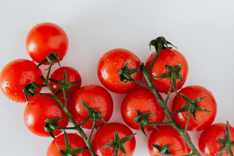 How to Grow Tumbling Tom Tomato: The Ultimate Guide