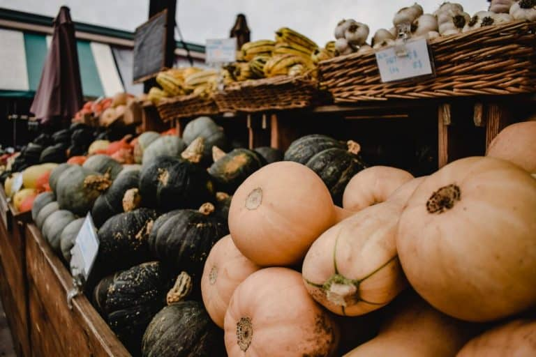 Is Butternut Squash A Fruit or Vegetable? (How To Classify & Grow It)