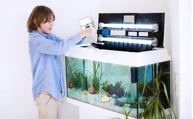 Can You Do Aquaponics Without Fish?