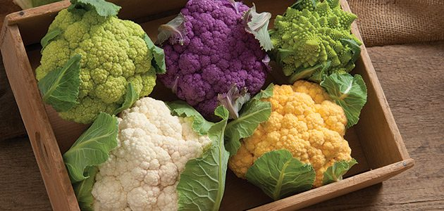 Can You Grow Cauliflower in Aquaponics? (read this first)