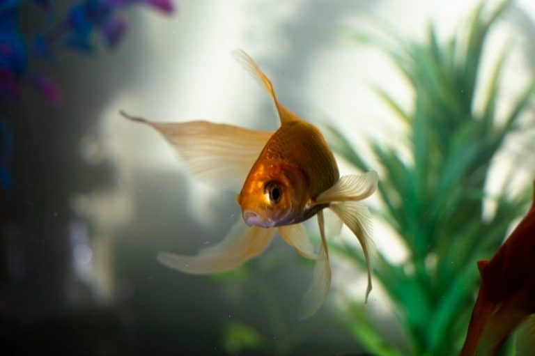 Do Fish Need Fake Plants in Their Tank? (explained)